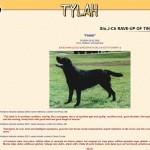 Oblikovanje spletne strani tylan.com